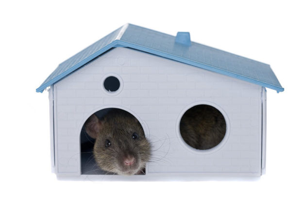 bay area attic cleaning, bay area rodent proofing