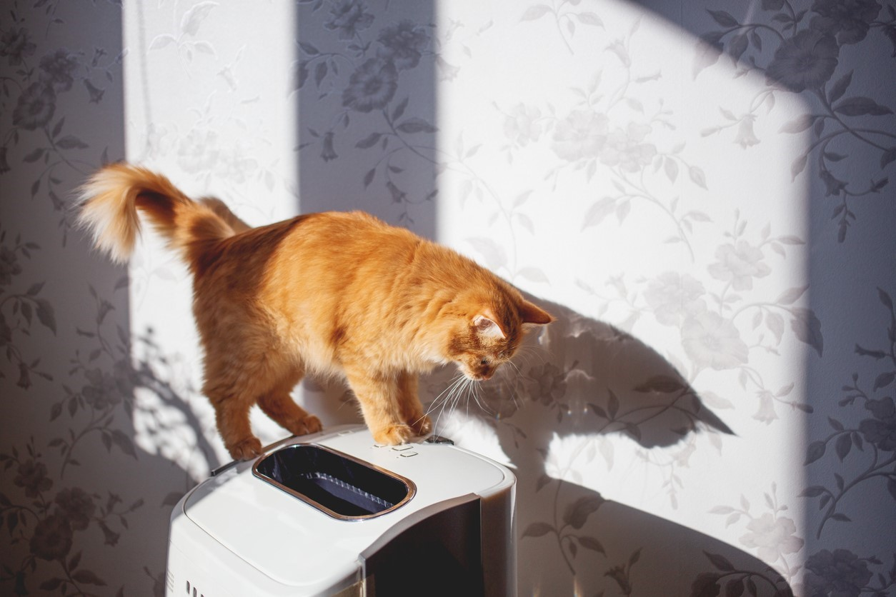 Protect Your HVAC from Pet Hair Element Home Solutions
